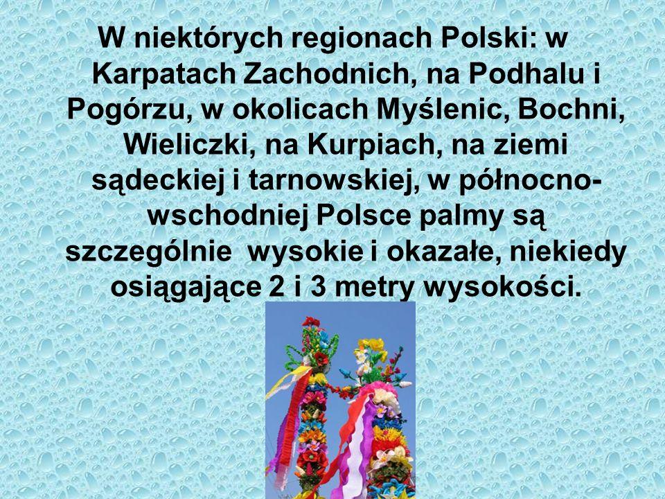 W niektórych regionach Polski: w Karpatach Zachodnich, na Podhalu i Pogórzu, w okolicach Myślenic, Bochni, Wieliczki, na Kurpiach, na ziemi sądeckiej i tarnowskiej, w północno-wschodniej Polsce palmy są szczególnie wysokie i okazałe, niekiedy osiągające 2 i 3 metry wysokości.
