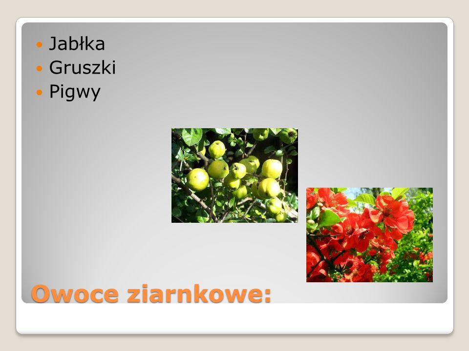 Jabłka Gruszki Pigwy Owoce ziarnkowe: