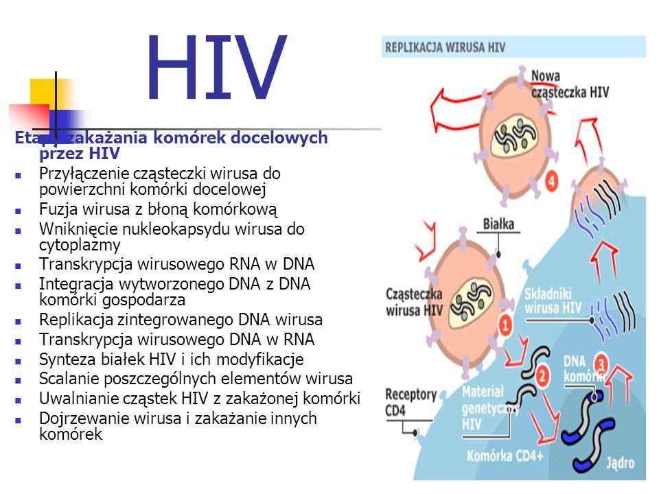 HIV Etapy zakażania komórek docelowych przez HIV