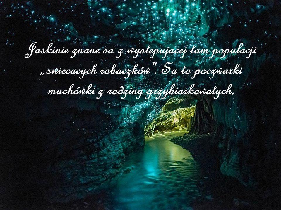 """Jaskinie znane sa z wystepujacej tam populacji """"swiecacych robaczków"""