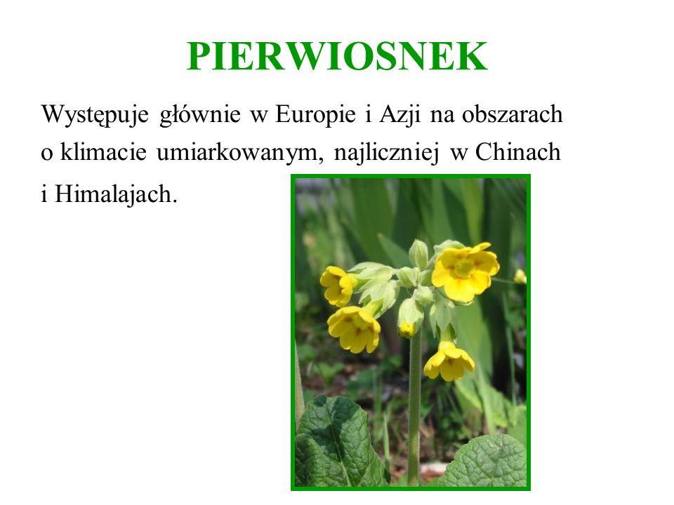 PIERWIOSNEK Występuje głównie w Europie i Azji na obszarach