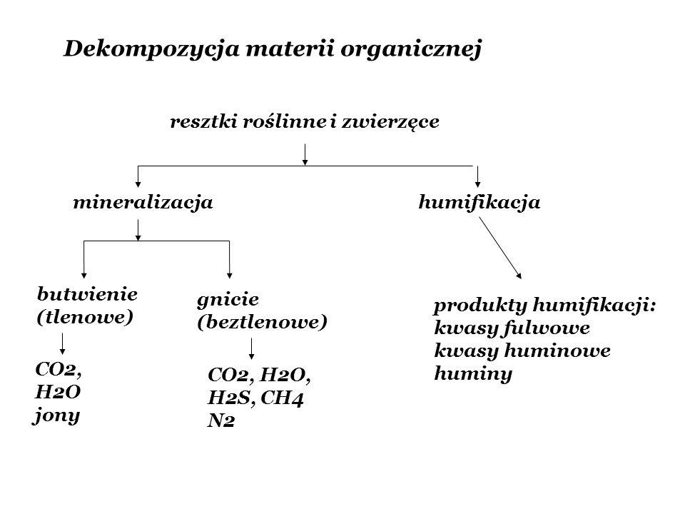 Dekompozycja materii organicznej