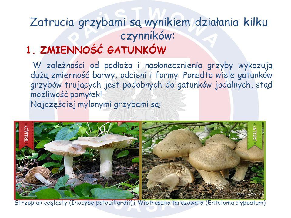 Zatrucia grzybami są wynikiem działania kilku czynników: