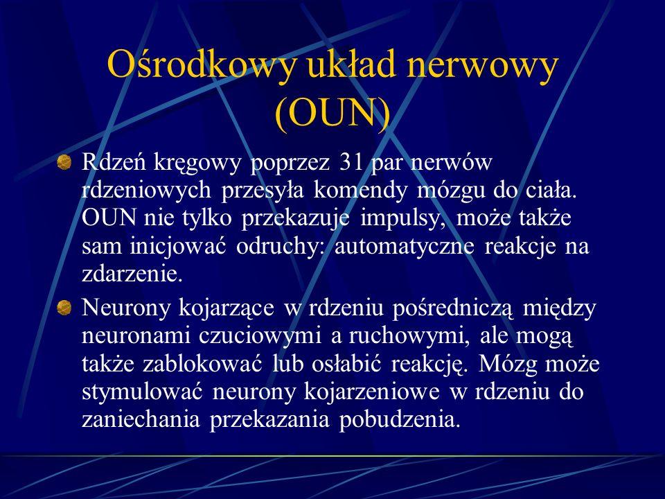 Ośrodkowy układ nerwowy (OUN)