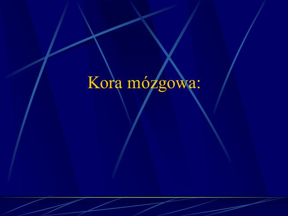 Kora mózgowa: