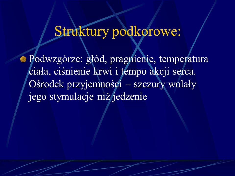 Struktury podkorowe: