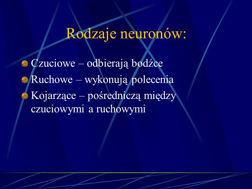 Rodzaje neuronów: Czuciowe – odbierają bodźce