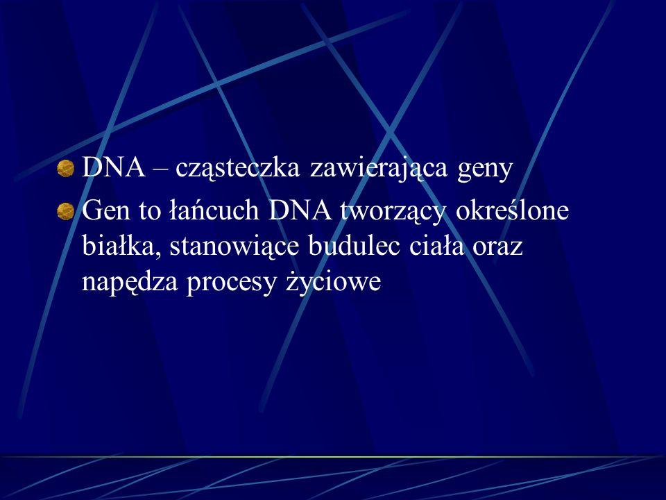 DNA – cząsteczka zawierająca geny