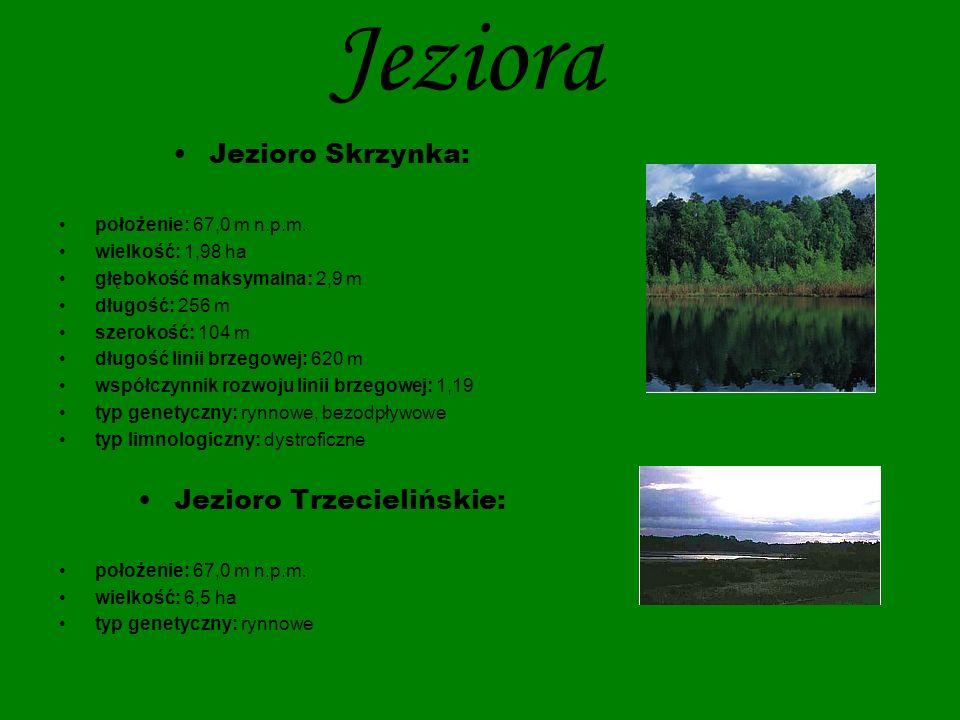 Jezioro Trzecielińskie: