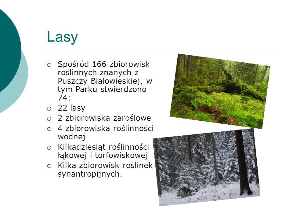 LasySpośród 166 zbiorowisk roślinnych znanych z Puszczy Białowieskiej, w tym Parku stwierdzono 74: 22 lasy.