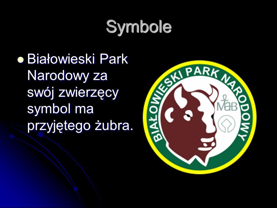 Symbole Białowieski Park Narodowy za swój zwierzęcy symbol ma przyjętego żubra.