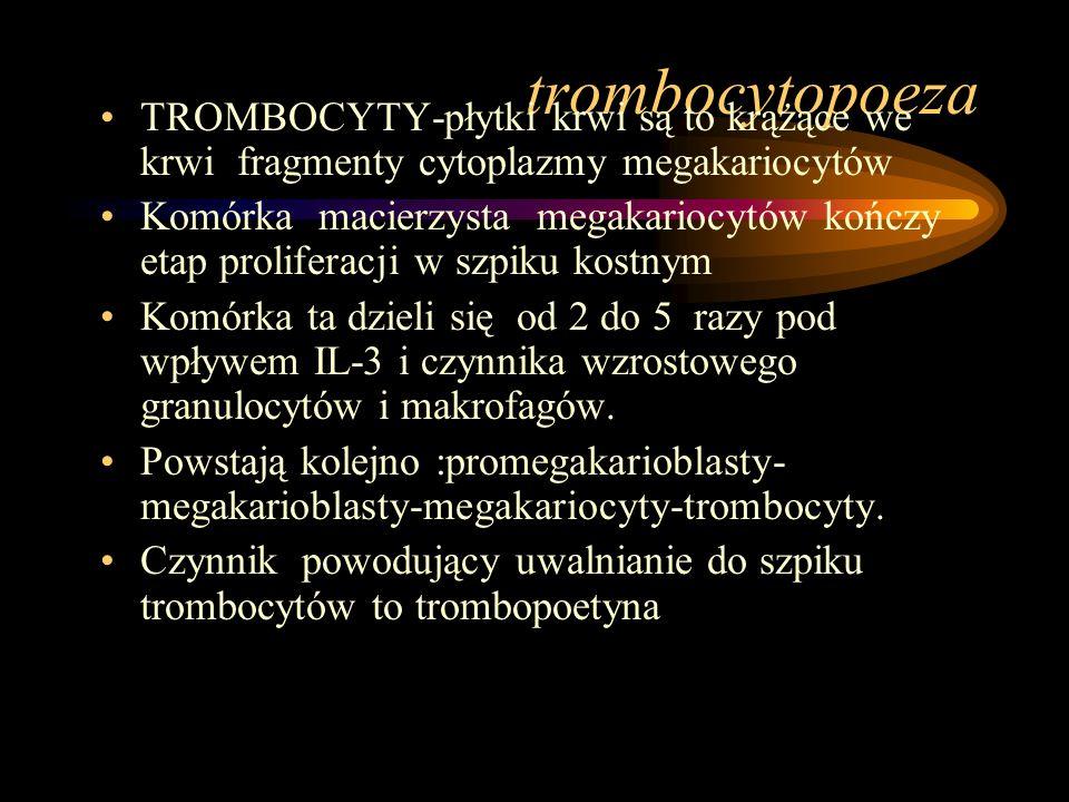 trombocytopoeza TROMBOCYTY-płytki krwi są to krążące we krwi fragmenty cytoplazmy megakariocytów.