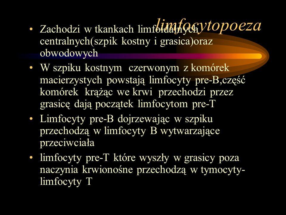limfocytopoeza Zachodzi w tkankach limfoidalnych centralnych(szpik kostny i grasica)oraz obwodowych.