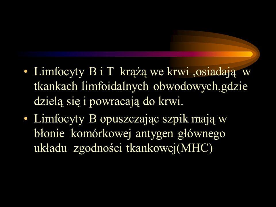 Limfocyty B i T krążą we krwi ,osiadają w tkankach limfoidalnych obwodowych,gdzie dzielą się i powracają do krwi.
