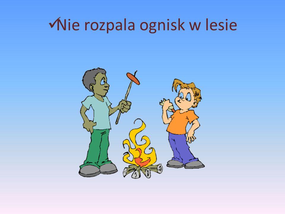 Nie rozpala ognisk w lesie