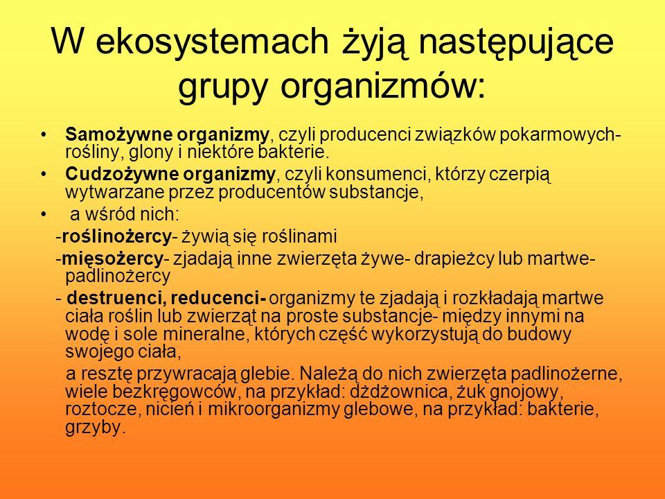 W ekosystemach żyją następujące grupy organizmów: