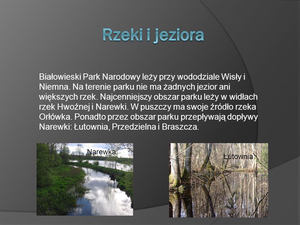 Białowieski Park Narodowy leży przy wododziale Wisły i Niemna