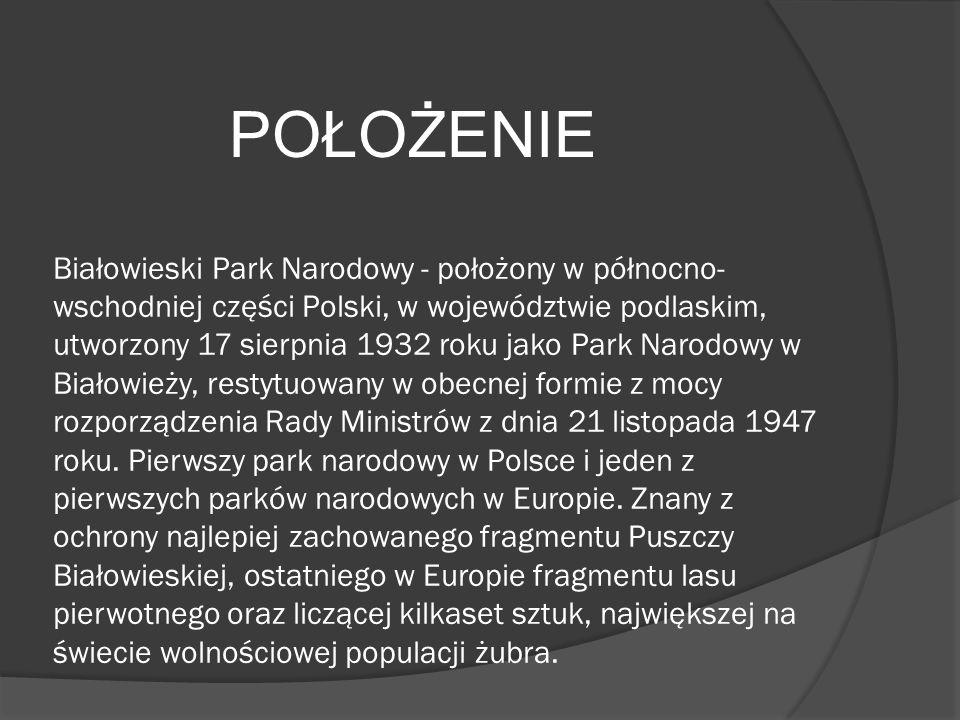 Białowieski Park Narodowy - położony w północno-wschodniej części Polski, w województwie podlaskim, utworzony 17 sierpnia 1932 roku jako Park Narodowy w Białowieży, restytuowany w obecnej formie z mocy rozporządzenia Rady Ministrów z dnia 21 listopada 1947 roku. Pierwszy park narodowy w Polsce i jeden z pierwszych parków narodowych w Europie. Znany z ochrony najlepiej zachowanego fragmentu Puszczy Białowieskiej, ostatniego w Europie fragmentu lasu pierwotnego oraz liczącej kilkaset sztuk, największej na świecie wolnościowej populacji żubra.