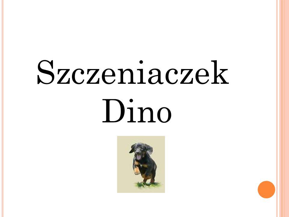 Szczeniaczek Dino