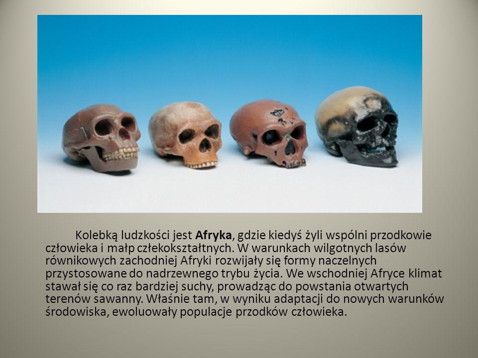 Kolebką ludzkości jest Afryka, gdzie kiedyś żyli wspólni przodkowie człowieka i małp człekokształtnych.