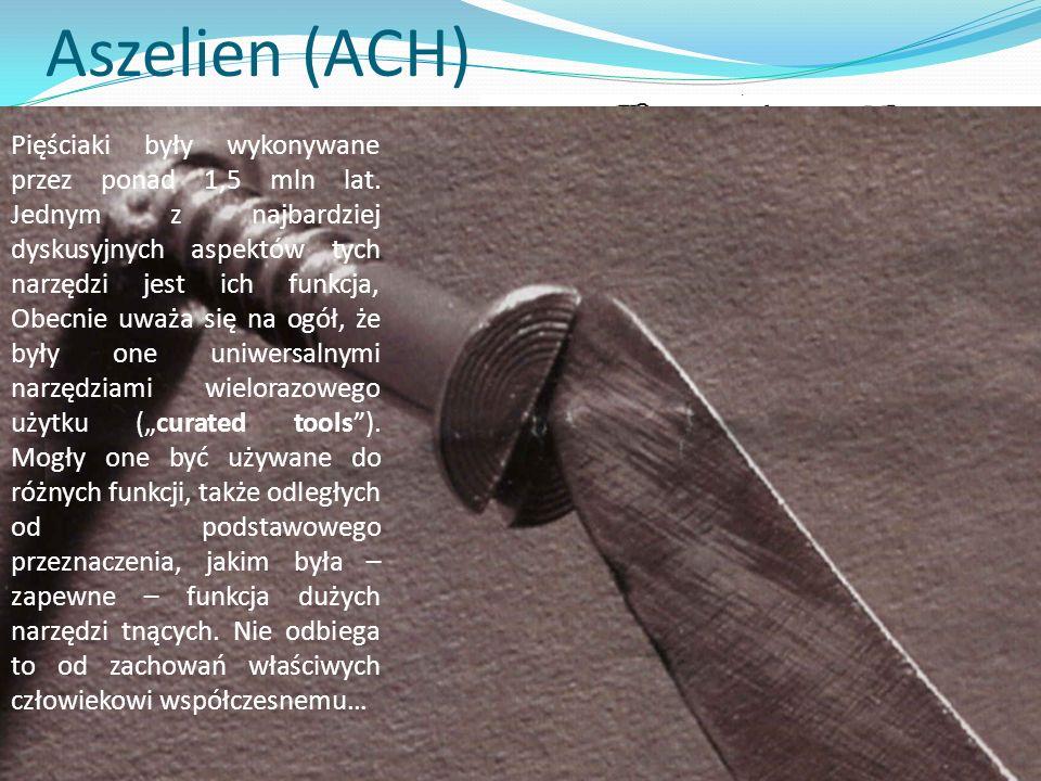 Aszelien (ACH) Rozłupiec wczesnoaszelski Sterkfontain, RPA