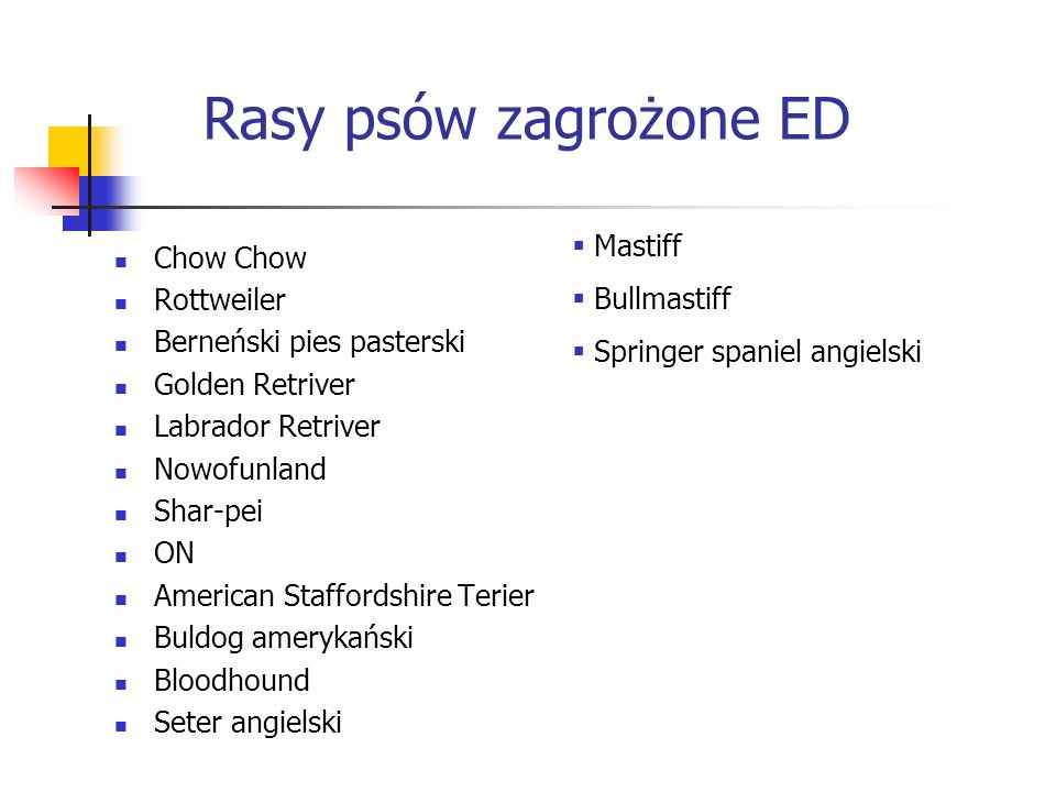 Rasy psów zagrożone ED Mastiff Chow Chow Bullmastiff Rottweiler
