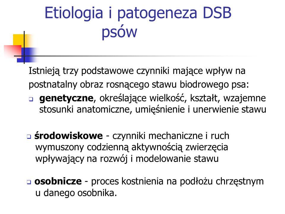 Etiologia i patogeneza DSB psów