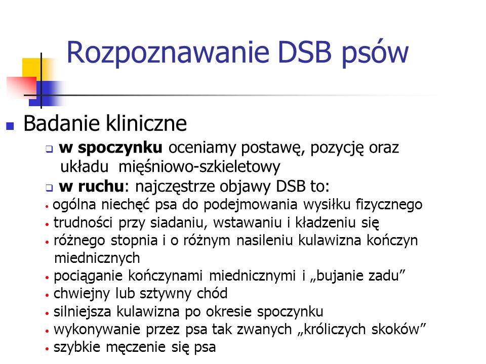 Rozpoznawanie DSB psów
