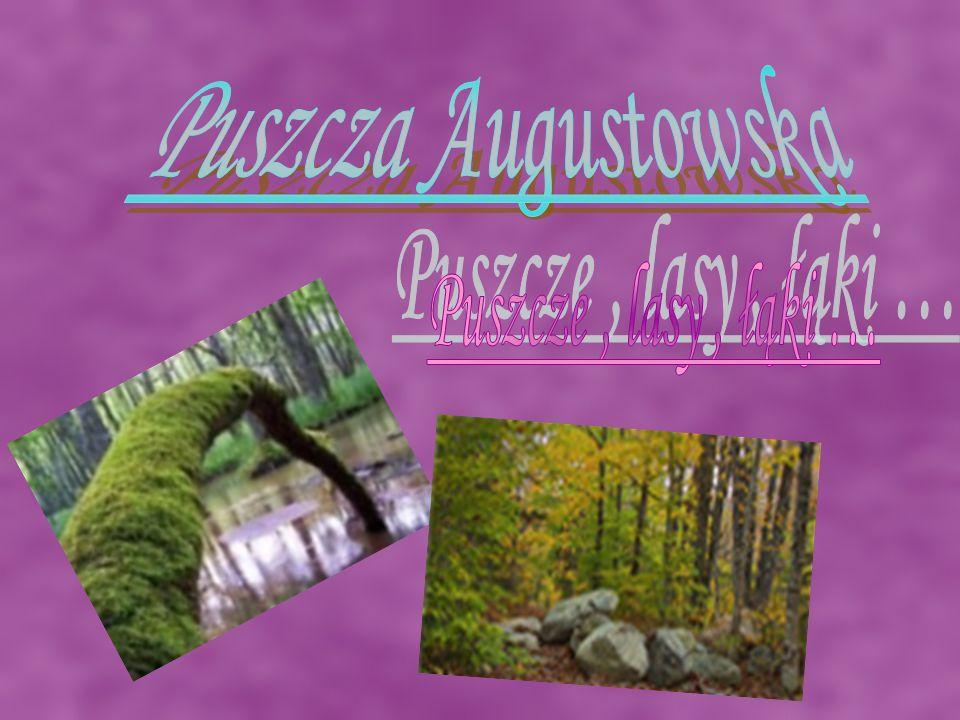 Puszcza Augustowska Puszcze , lasy , łąki …