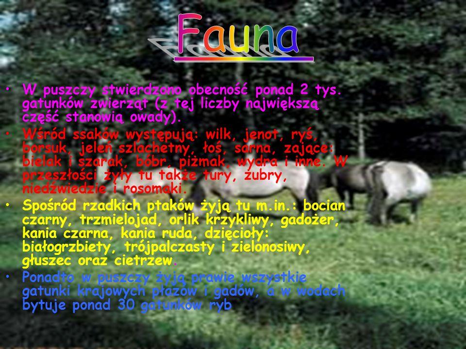 Fauna W puszczy stwierdzono obecność ponad 2 tys. gatunków zwierząt (z tej liczby największą część stanowią owady).