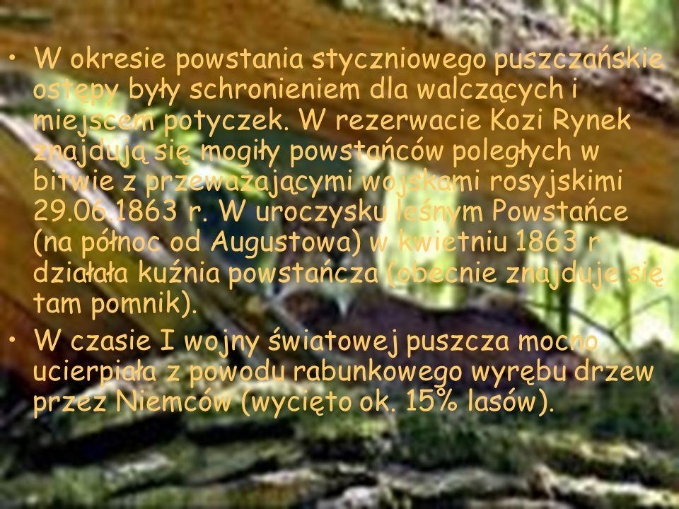 W okresie powstania styczniowego puszczańskie ostępy były schronieniem dla walczących i miejscem potyczek. W rezerwacie Kozi Rynek znajdują się mogiły powstańców poległych w bitwie z przeważającymi wojskami rosyjskimi 29.06.1863 r. W uroczysku leśnym Powstańce (na północ od Augustowa) w kwietniu 1863 r. działała kuźnia powstańcza (obecnie znajduje się tam pomnik).