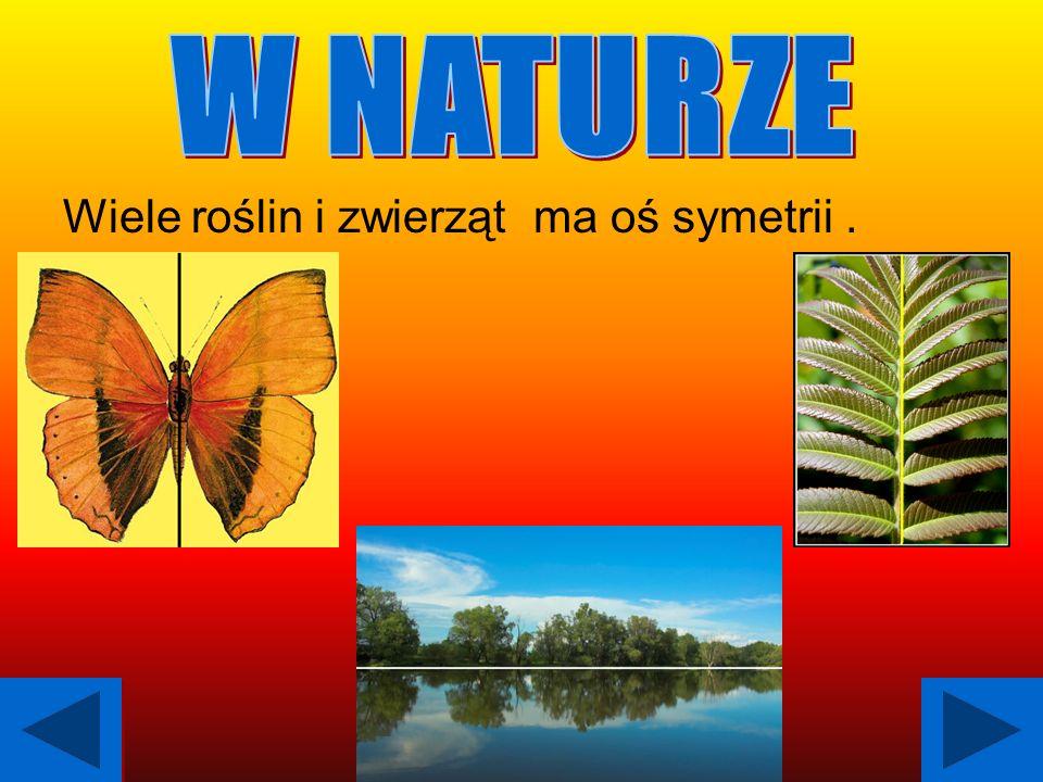 W NATURZE Wiele roślin i zwierząt ma oś symetrii .