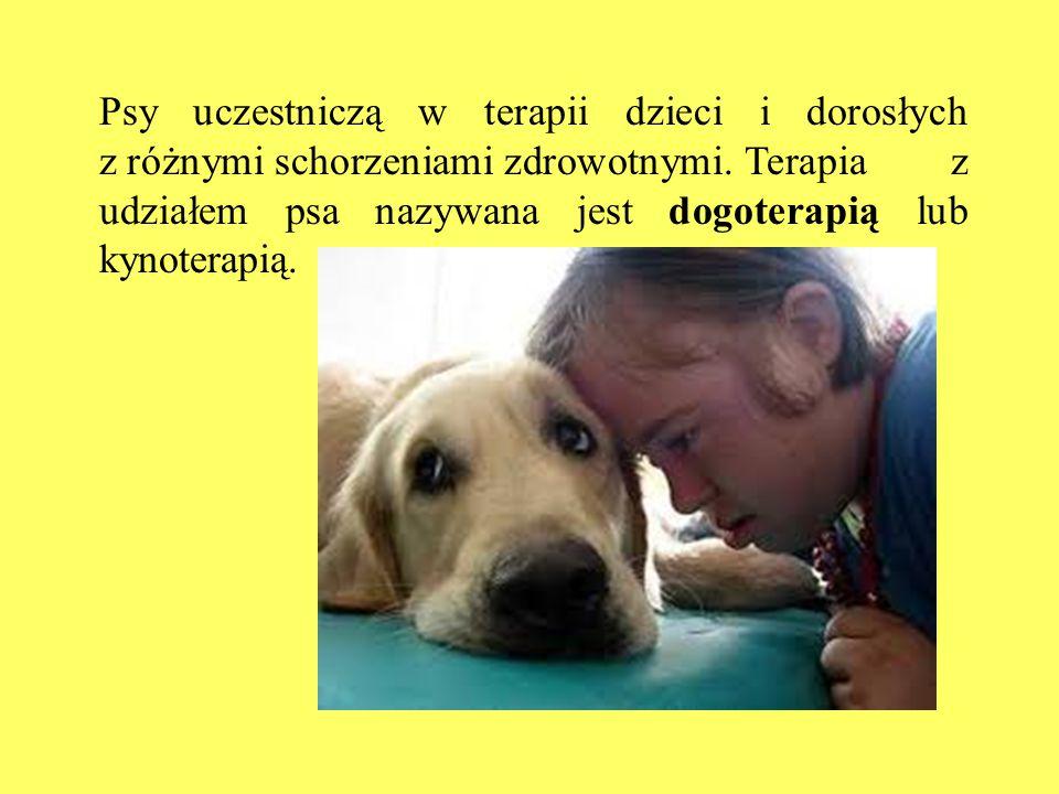 Psy uczestniczą w terapii dzieci i dorosłych z różnymi schorzeniami zdrowotnymi.