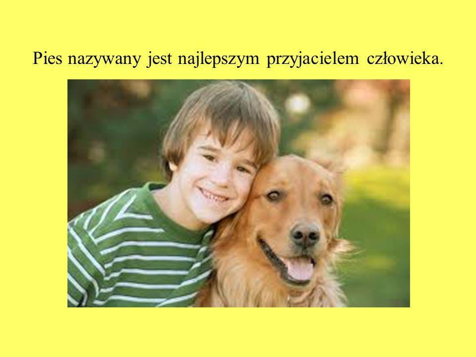 Pies nazywany jest najlepszym przyjacielem człowieka.