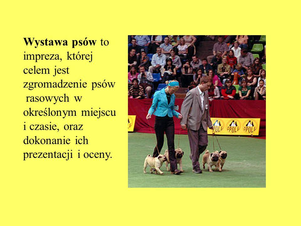 Wystawa psów to impreza, której celem jest zgromadzenie psów rasowych w określonym miejscu i czasie, oraz dokonanie ich prezentacji i oceny.