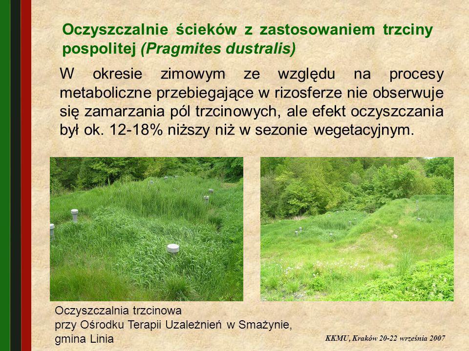 Oczyszczalnie ścieków z zastosowaniem trzciny pospolitej (Pragmites dustralis)