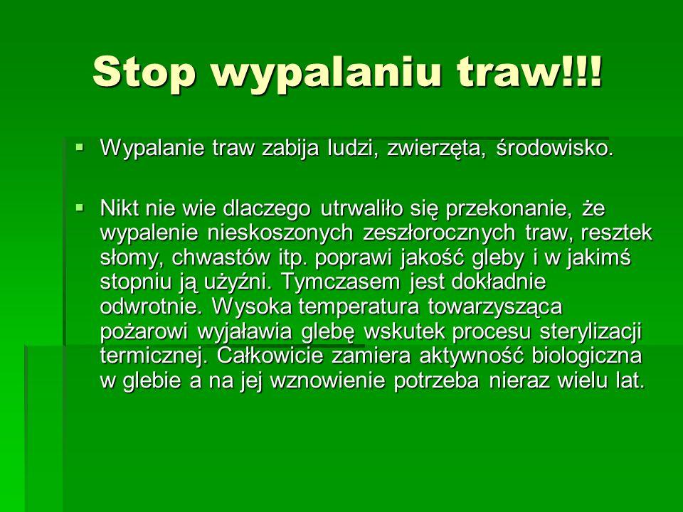 Stop wypalaniu traw!!! Wypalanie traw zabija ludzi, zwierzęta, środowisko.