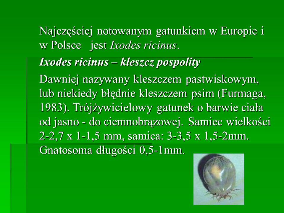 Najczęściej notowanym gatunkiem w Europie i w Polsce jest Ixodes ricinus.