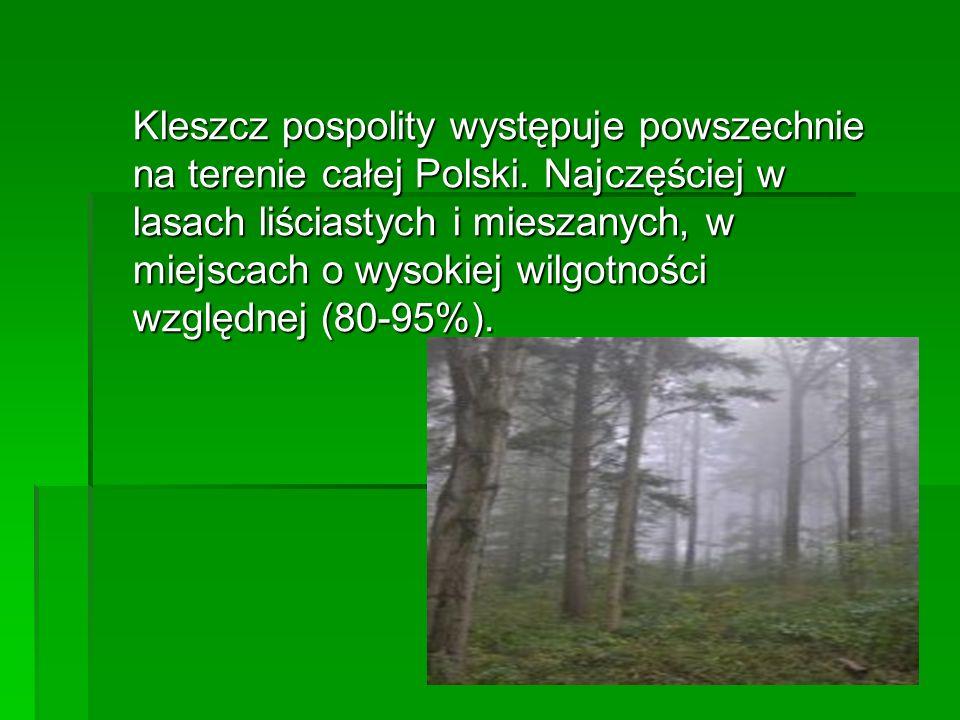 Kleszcz pospolity występuje powszechnie na terenie całej Polski