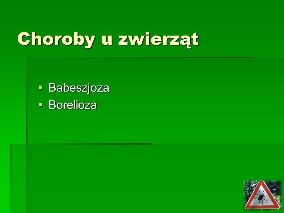 Choroby u zwierząt Babeszjoza Borelioza