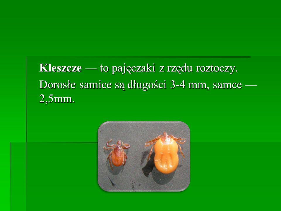 Kleszcze — to pajęczaki z rzędu roztoczy