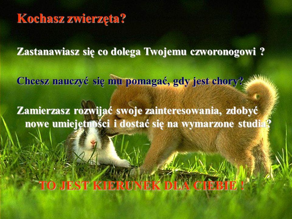 Kochasz zwierzęta TO JEST KIERUNEK DLA CIEBIE !