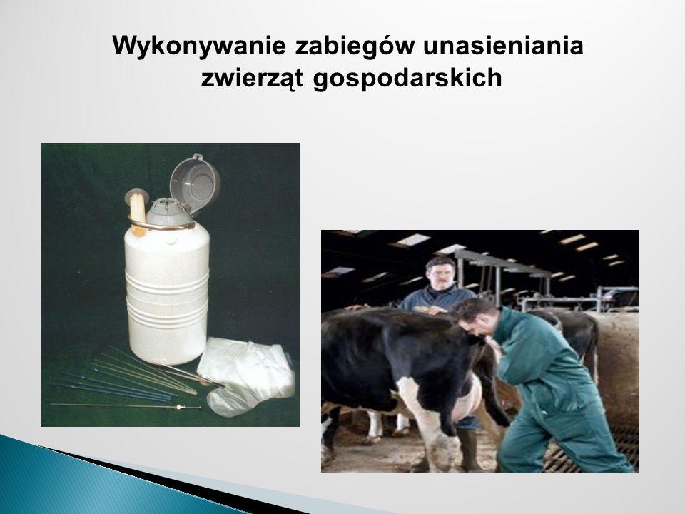 Wykonywanie zabiegów unasieniania zwierząt gospodarskich