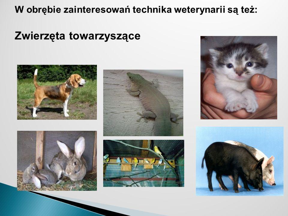 Zwierzęta towarzyszące