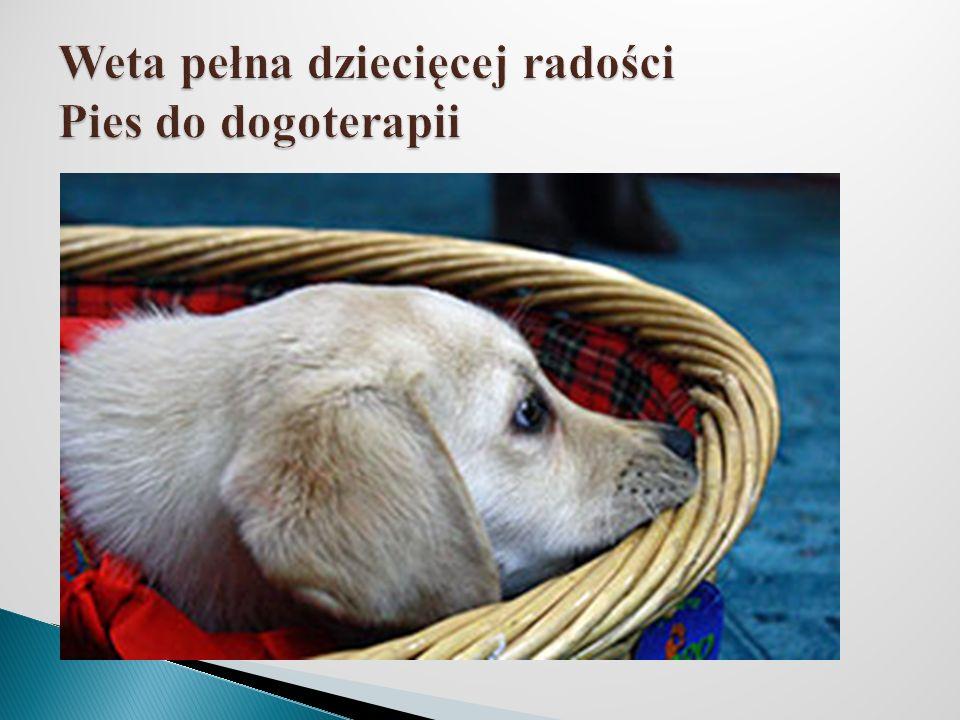 Weta pełna dziecięcej radości Pies do dogoterapii