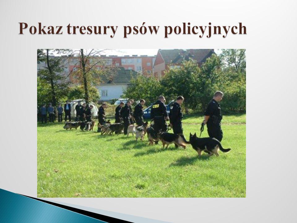 Pokaz tresury psów policyjnych