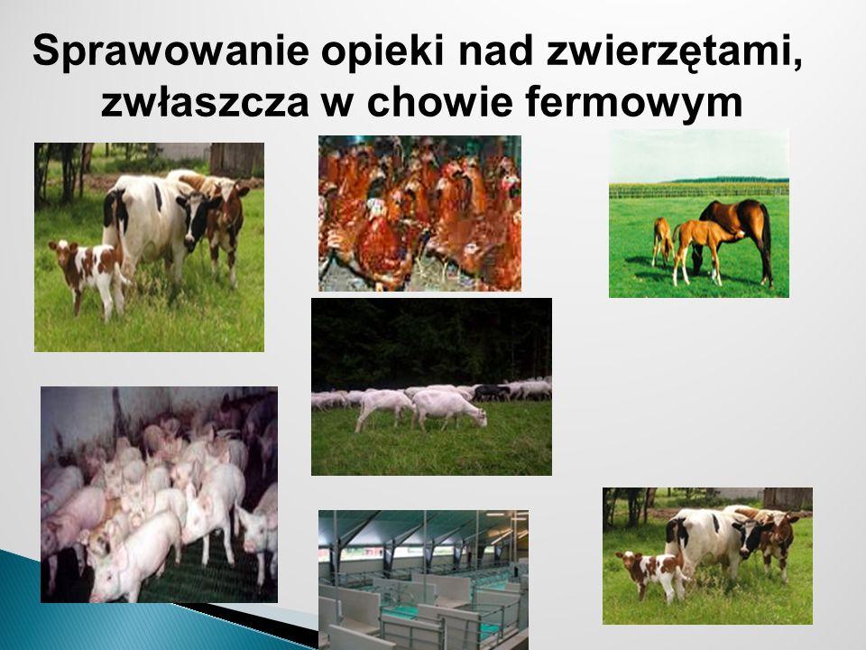 Sprawowanie opieki nad zwierzętami, zwłaszcza w chowie fermowym
