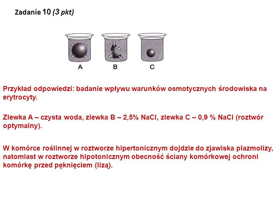 Zadanie 10 (3 pkt) Przykład odpowiedzi: badanie wpływu warunków osmotycznych środowiska na erytrocyty.