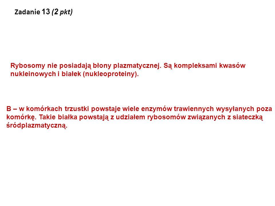 Zadanie 13 (2 pkt) Rybosomy nie posiadają błony plazmatycznej. Są kompleksami kwasów nukleinowych i białek (nukleoproteiny).
