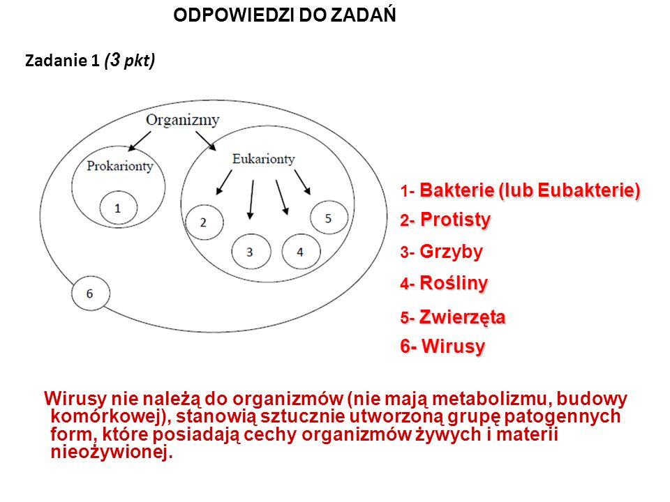 ODPOWIEDZI DO ZADAŃ Zadanie 1 (3 pkt) 6- Wirusy